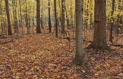 Assoalho da floresta na queda Foto de Stock