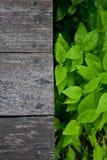 Assoalho de madeira com folha fresca Imagens de Stock Royalty Free