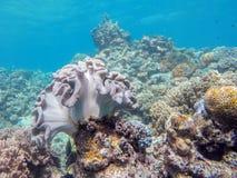 Assoalho de mar Foto de Stock
