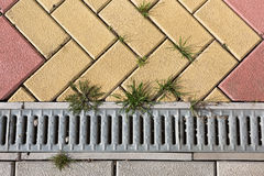Assoalho do tijolo com grama, fundo e textura da planta Fotos de Stock