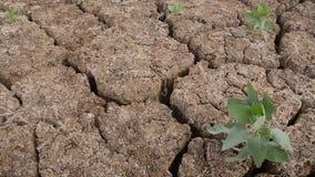 Assoalho seco de Canudos Velho, Brasil video estoque