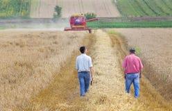 Associés sur le champ de blé photographie stock libre de droits