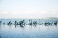 A associação beira-mar Fotografia de Stock