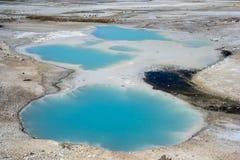 Associação coloidal em Norris Geyser Basin no parque nacional Wyoming EUA de Yellowstone Fotos de Stock