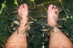 Associação com peixes, que fazem o descascamento dos pés dos homens Pés que descascam com os peixes de Garra Rufa fotografia de stock