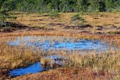 Associação do pântano no pântano aumentado Fotos de Stock