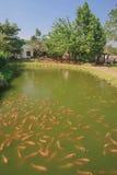 Associação dos peixes Fotos de Stock Royalty Free