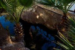 Associação e palmas termal pequenas em Pamukkale Imagem de Stock
