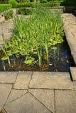 Associação em um jardim bonito no oeste - yorkshire Inglaterra fotografia de stock
