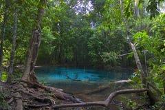 Associação esmeralda na floresta Fotografia de Stock