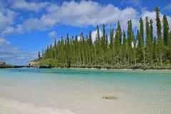 Associação natural com a areia branca fina e os pinheiros de ascensão no fundo Fotos de Stock Royalty Free