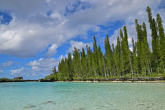 Associação natural com fileira de pinheiros altos de ascensão, de nuvens brancas pesadas e da água clara de turquesa Fotos de Stock