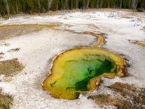Associação quente do geyser na área fiel velha do parque nacional de Yellowstone Imagem de Stock