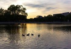 A associação refletindo do Capitólio no por do sol no Washington DC, EUA Imagens de Stock Royalty Free