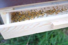 Associações das abelhas fotografia de stock
