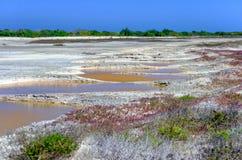 Associações pequenas do sal em Rio Lagartos fotografia de stock