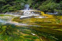 Associa??o t?rmica no vale vulc?nico de Waimangu em Rotorua, ilha norte, Nova Zel?ndia imagem de stock