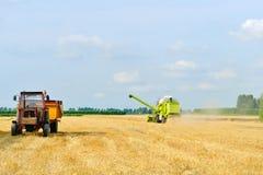Associazione della mietitrice del grano che lavora nel campo Fotografia Stock