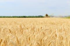 Associazione della mietitrice del grano che lavora nel campo Immagini Stock