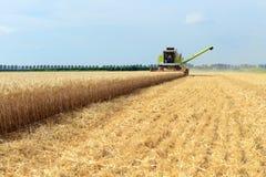 Associazione della mietitrice del grano che lavora nel campo Fotografie Stock Libere da Diritti