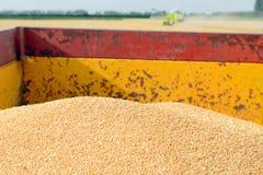 Associazione della mietitrice del grano che lavora nel campo Fotografia Stock Libera da Diritti
