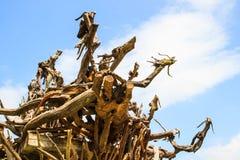 Assomigliare del legno di progettazione di arte ai draghi con cielo blu nel giardino pubblico immagini stock libere da diritti