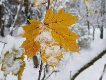 Assorbimento di inverno fotografia stock