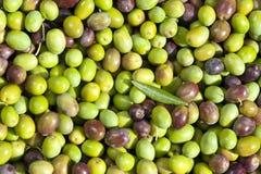 Assorment der Oliven, frisch ausgewählt Lizenzfreie Stockbilder