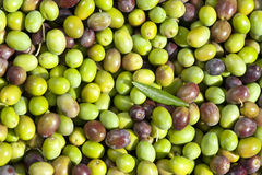 Assorment of olives, freshly picked Royalty Free Stock Images