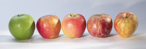 Assorted apples Stock Images