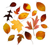Assorted Autumn leaves Stock Images