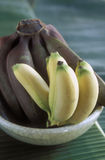 Assorted bananas Stock Photography