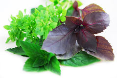 Assorted basil herbs Stock Photos