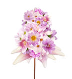 Assorted beautiful pink flower.Lily,orchid,chamomile and other f Royalty Free Stock Photos