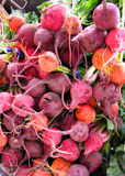 Assorted beets at the market. Colorful assorted beets at the sf farmer's market Royalty Free Stock Images