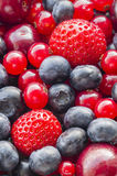 Assorted berries Royalty Free Stock Images