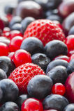 Assorted berries Royalty Free Stock Photo