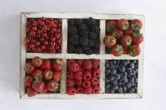 Assorted berry fruits in container view from above Stock Images