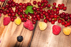 Assorted Berry Royalty Free Stock Photos