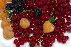 Assorted Berry, Stock Photos