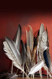 Assorted Birds Feathers Royalty Free Stock Photo