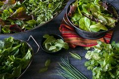 Assorted bowls filled with a variety of freshly harvested leafy greens royalty free stock photo