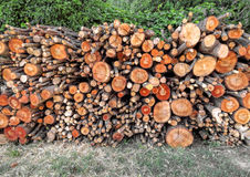 Assorted bundle of firewood Stock Images