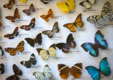 An assorted butterfly collection in a glass display case. With name labels royalty free stock images
