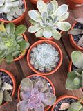 Cactus in pots. Assorted cactus pots nursery Beautiful Stock Images