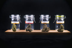 Assorted cannabis bud strains and glass jars - medical marijuana. Assorted cannabis bud strains and glass jars isolated on black background - medical marijuana Royalty Free Stock Photos