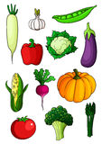 Assorted cartoon ripe vegetables on white Stock Images