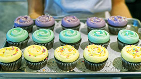 Assorted color cupcakes on tray Stock Image