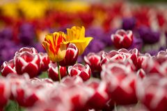 Assorted Color of Flowers during Daytime Royalty Free Stock Photography