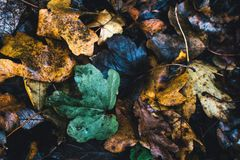 Assorted Color Leafs Photo Royalty Free Stock Photos